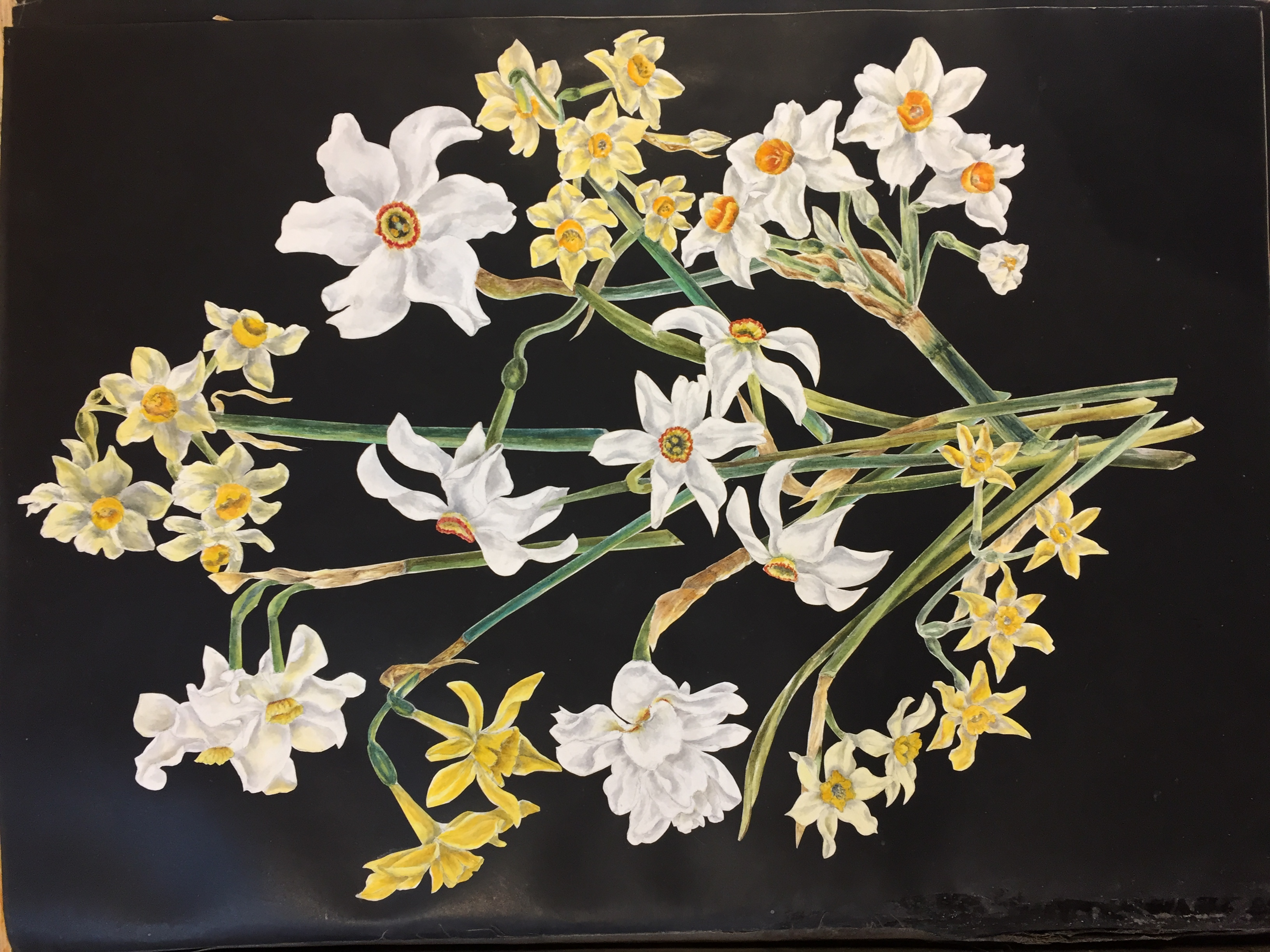 Downside Archive Collections Wild Flowers
